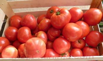 Paradajz, rajčica za pasiranje