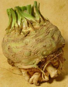celer korjen