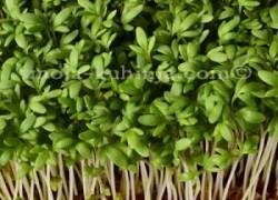Sjetvena grbica | Kreš salata