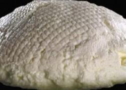 Svježi sir